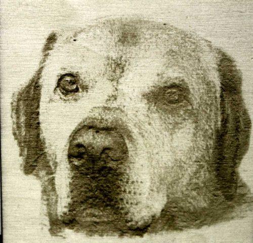 Fotogravur mein Hund